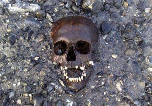 thames discovery programme - discoveries on the isle of dogs, Skeleton